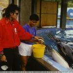 Michael feeding dolphin